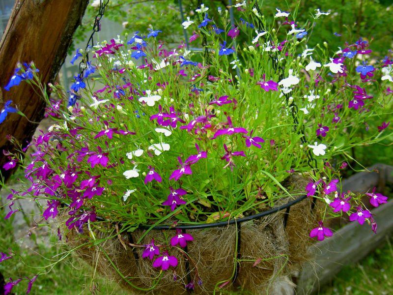 Выращивание и посадка уход и полив