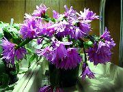 Онлайн справочник домашних кактусов и