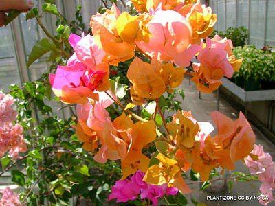 Вьющиеся цветы для дачи с фото — цветы