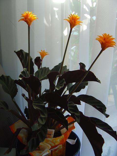 Комнатные растения гранулы